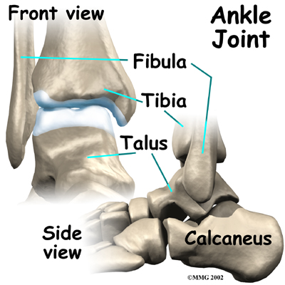 ankle fusionm anatomy01